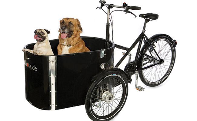 bike cargo dog