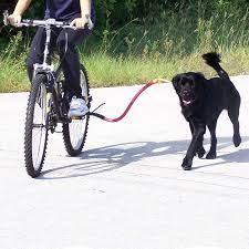 dog carry