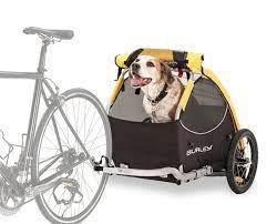 dog carry 03