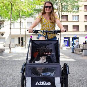 transport de chien velo pliable 1