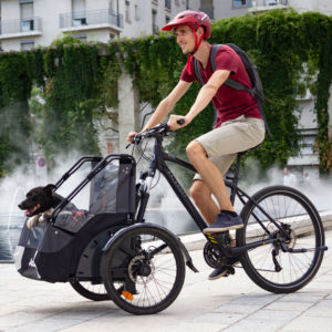 transport dog with cargo bike